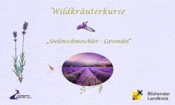Wildkräuterkurs Lavendel